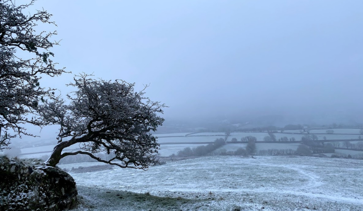 Tree in snowy Dartmoor.