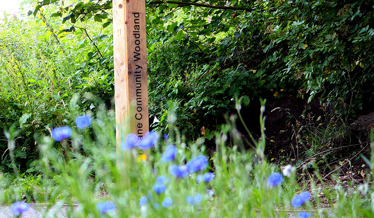 Wildflower meadow with a signpost