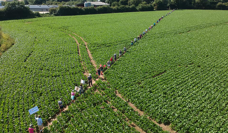 A long line of people walking through a field