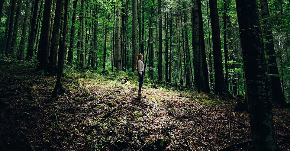A woman standing still among tall forest trees