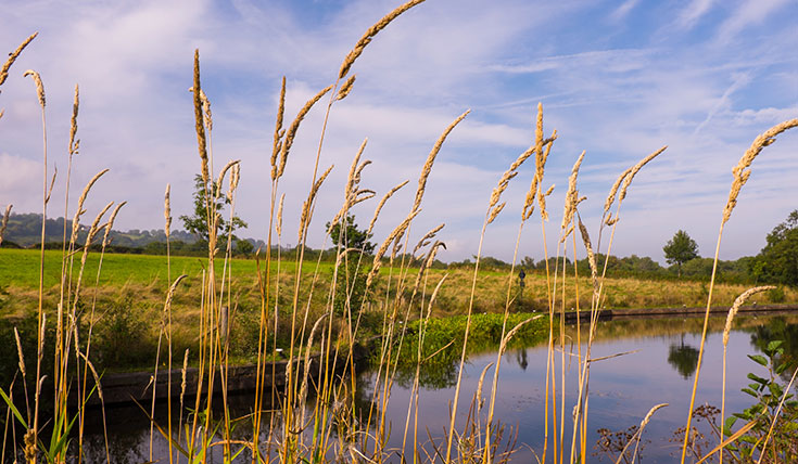 Reeds and river on a blue sky day.