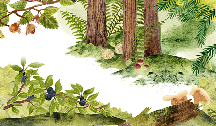 Illustration of woodland plants, berries and mushrooms