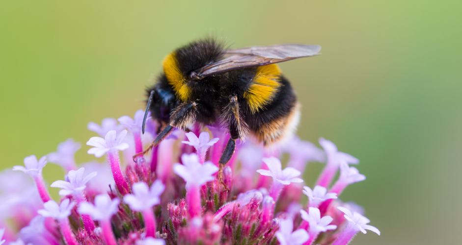 Bee on flower by James Petts