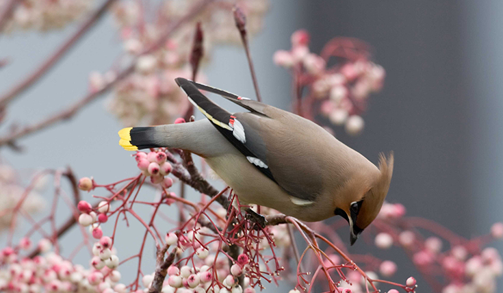 Bird of a feather 3 by Waxwing