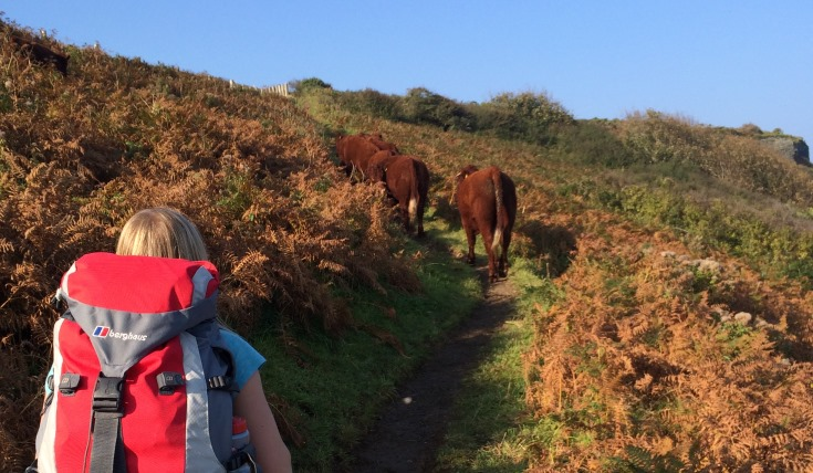 Ruth walks along a path with two cows ahead walking the same path