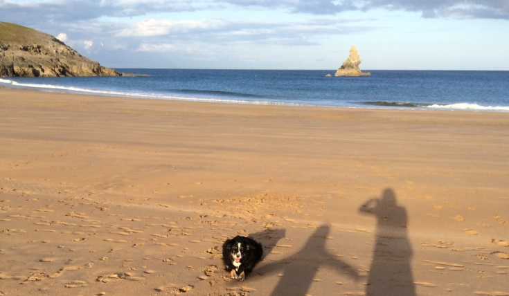 A dog sitting on a beach with the shadows of two people stretching alongside it