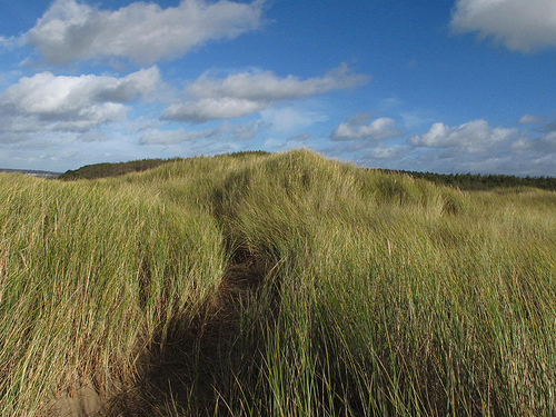 Path through marram grass