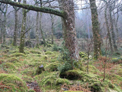 Ancient woodland