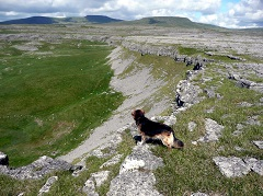 Jess the dog on Moughton Scar looking down into Crummackdale