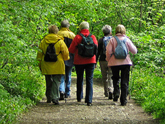 Group walking in woodland