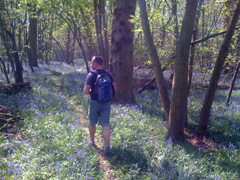Walker with bluebells