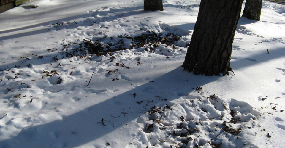 Animal tracks in the snow by Phil Pickin