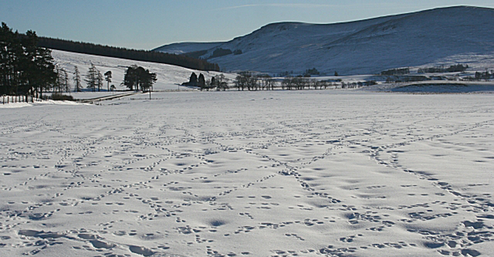Animal tracks in the snow via Geograph