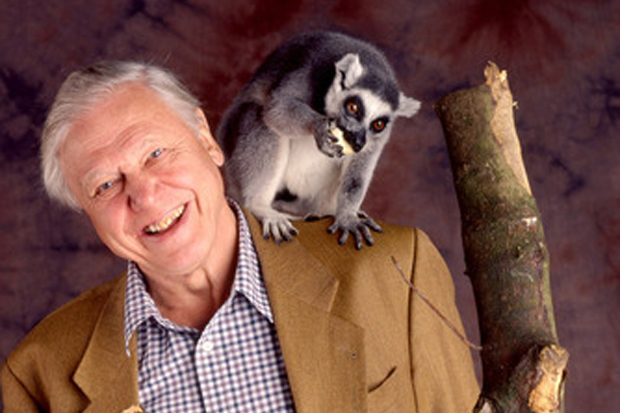 Sir David Attenborough 39 S Perfect Day Ramblers