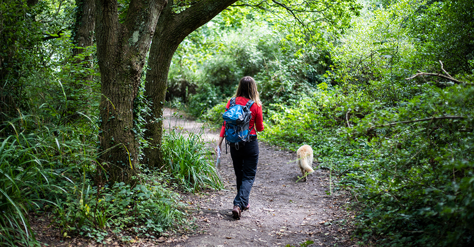 A woman and dog walking along a woodland path