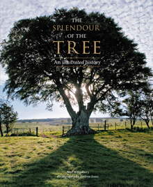 The Splendour of the Tree front cover