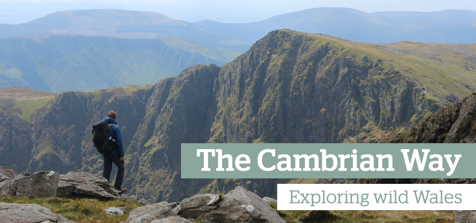 The Cambrian Way
