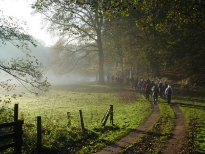 Mist, Woodland and Long Shadows. Photo by Fred.
